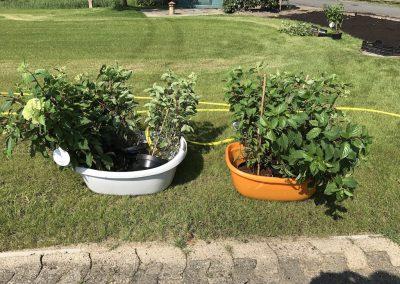Pflanz- und Rasenarbeiten