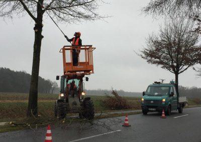Gehölz- und Baumpflege
